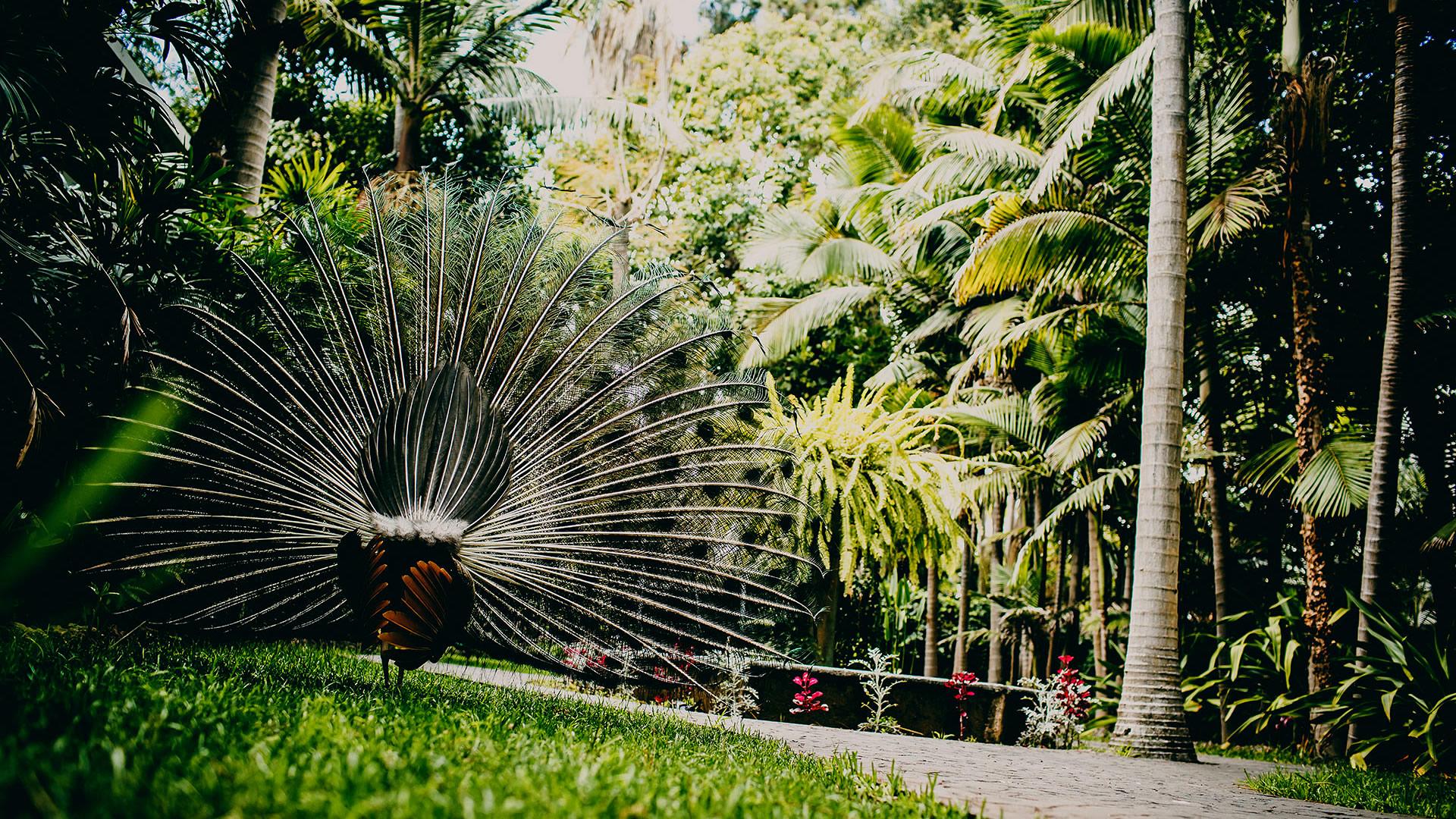 Los Jardines de la Marquesa 1